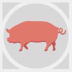 circle-pig